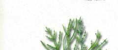 Le Alghe un viaggio a ritroso nel tempo di Ugo Petrossi