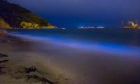 Il fenomeno della bioluminescenza delle alghe su una spiaggia delle isole Matsu